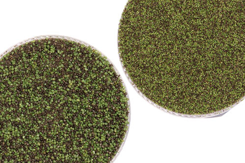 Envirofill 16-30 and 30-50 Green and Black Blend Turf Infill Coated Sand by USGreentech